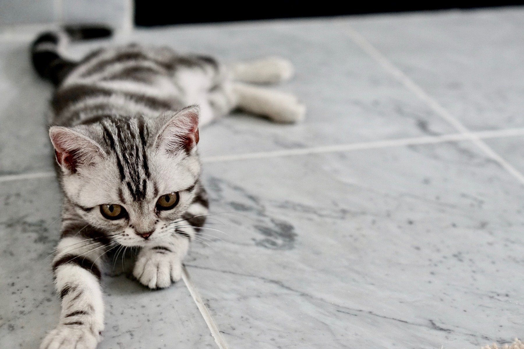 Kätzchen-Erziehung mittels Clickertraining