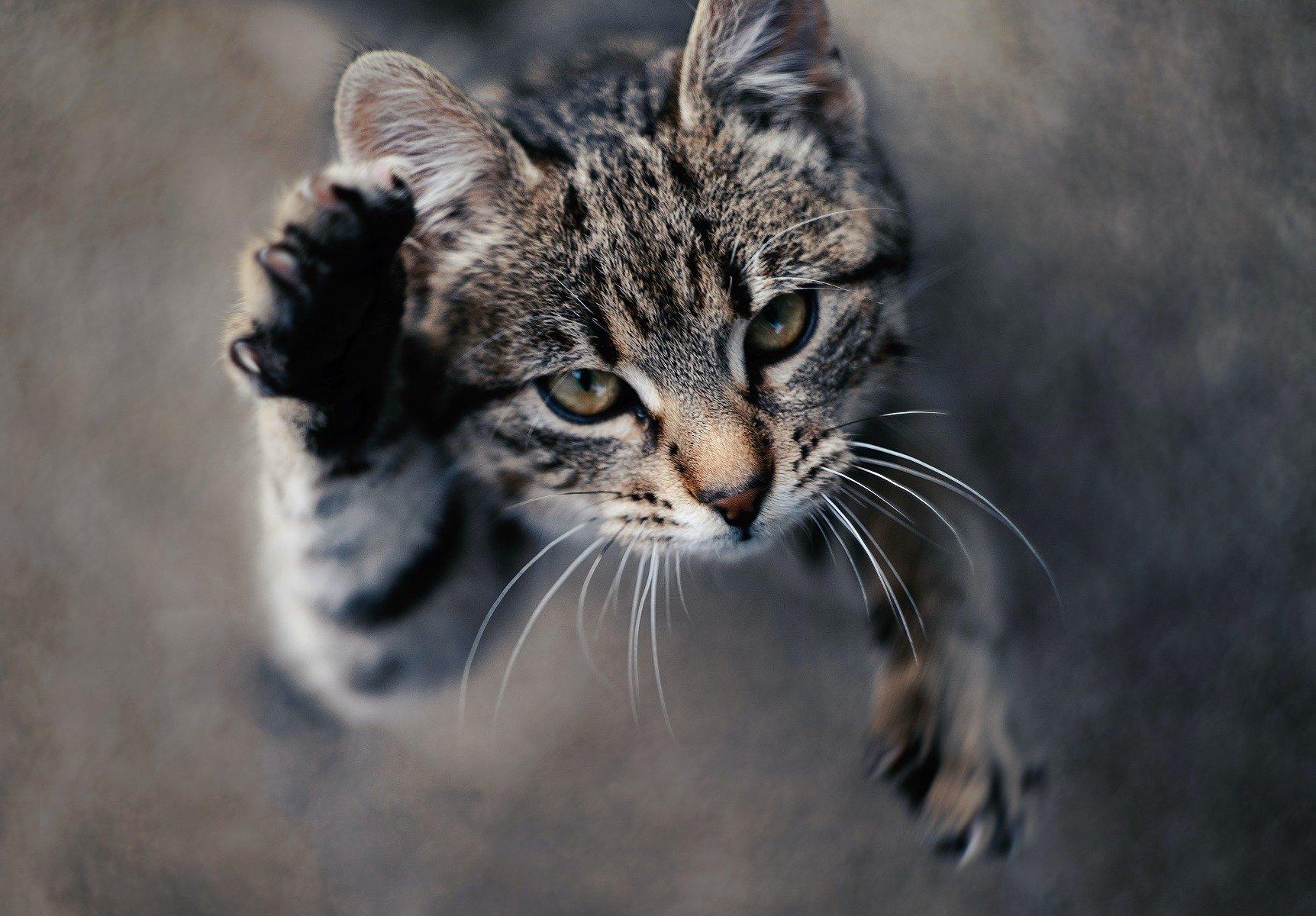 Clickern mit Katze – Erziehung und Tricks