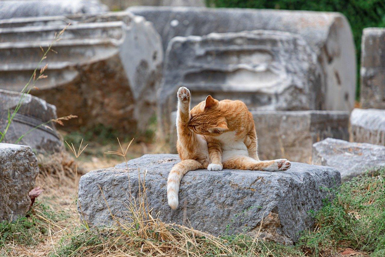 Katze sitzt auf einem Stein und putzt ihr hinteres Bein