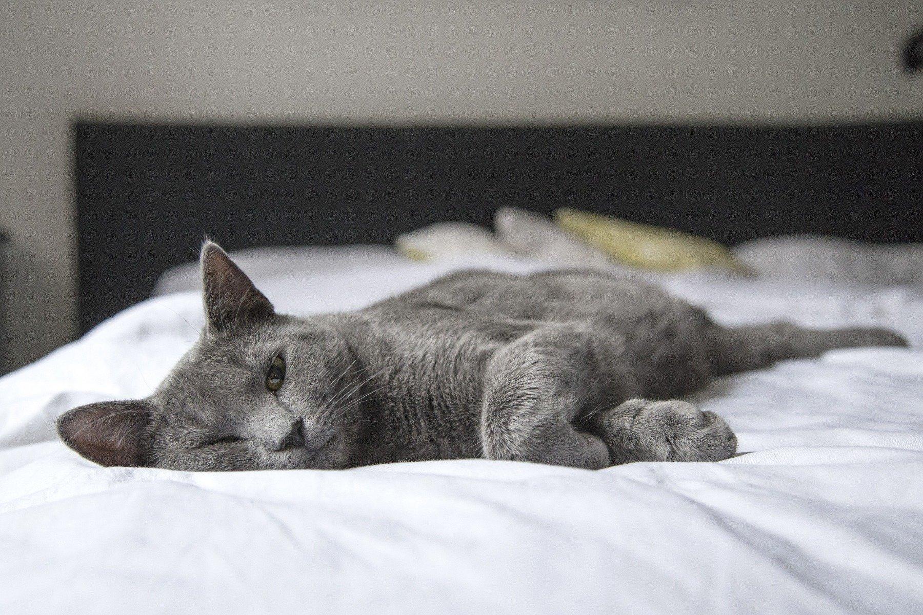 Katze pinkelt ins Bett – körperliche Ursachen