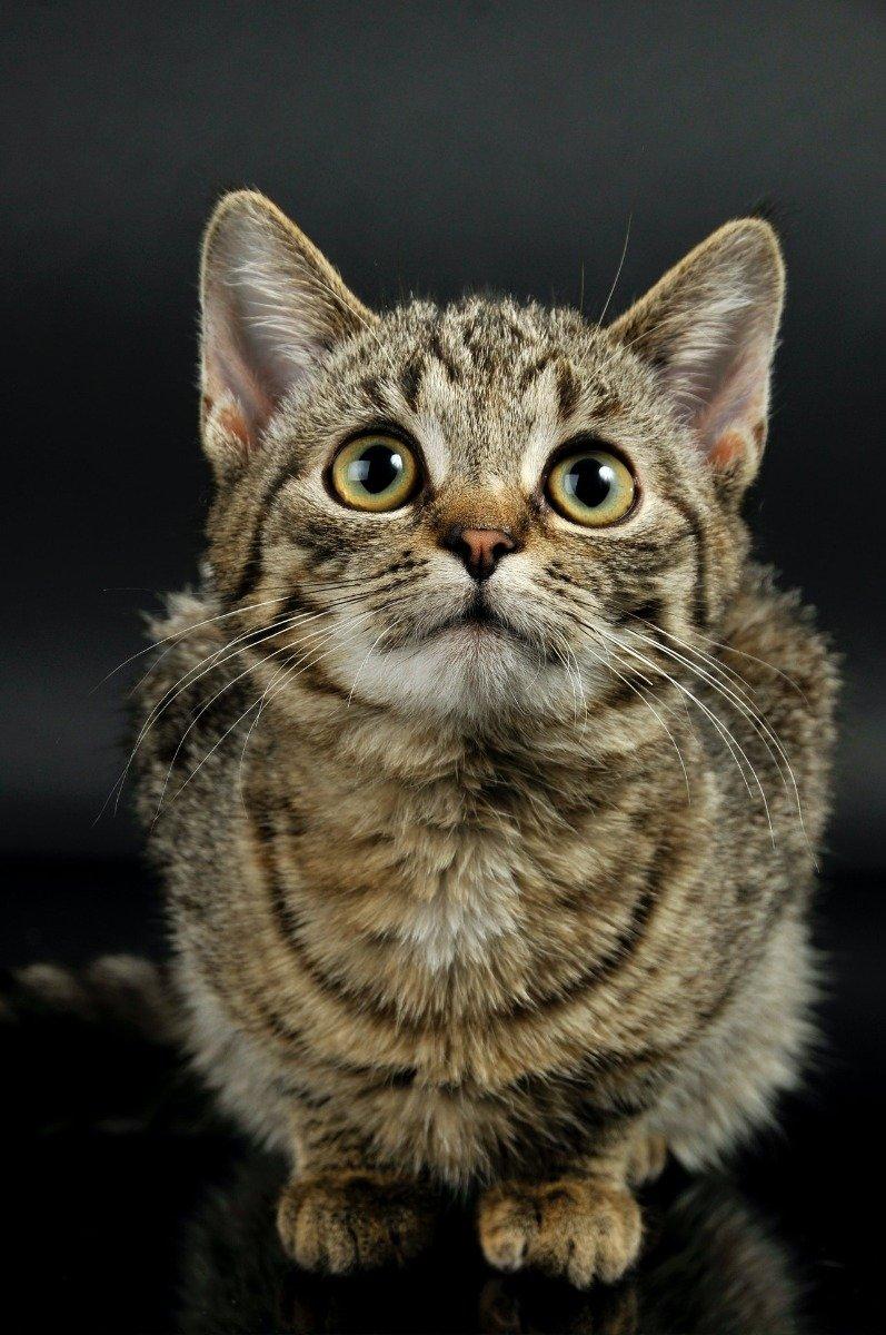 Eine getigerte Katze schaut ängstlich nach oben