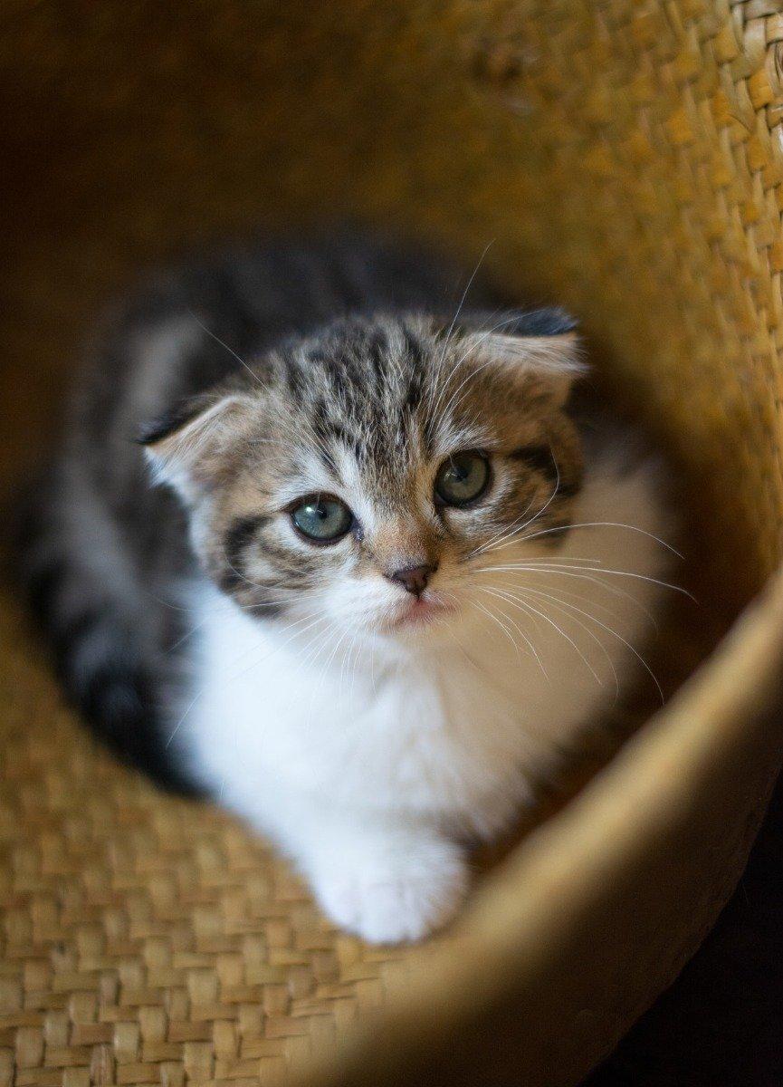 Getigerte Katze mit weißem Bauch sitzt in Korb und schaut nach oben