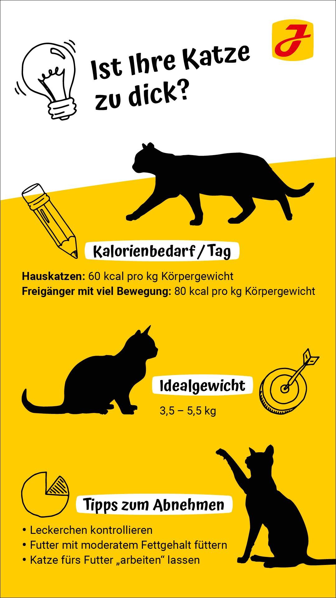 Größe katze alter gewicht Tiersteckbriefe