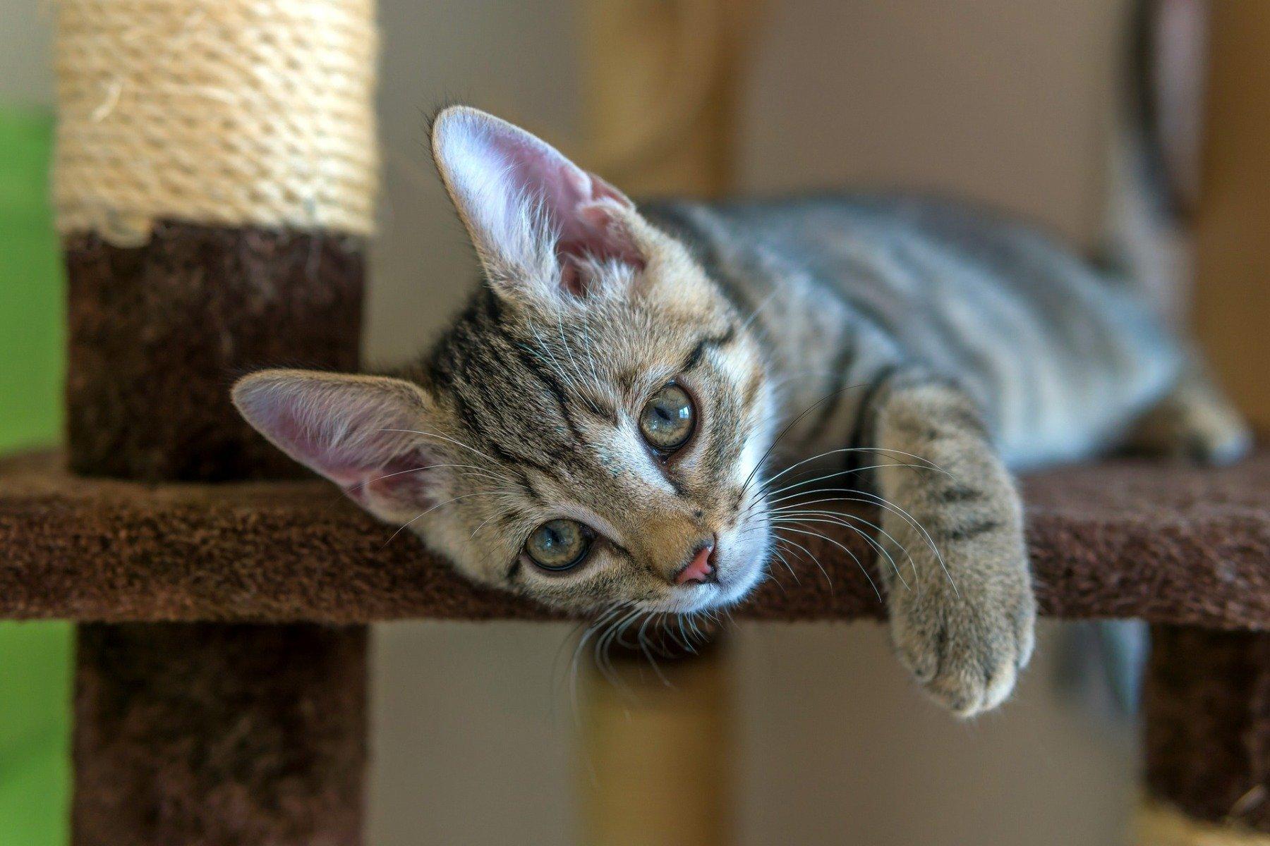 Kitten auf einem Kletterbaum