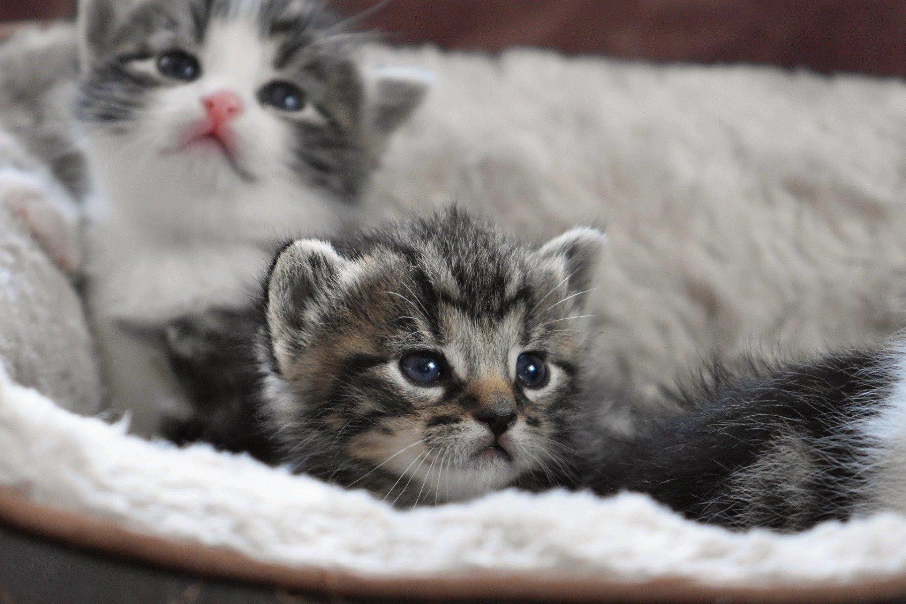 Katzenbabys beim Kuscheln