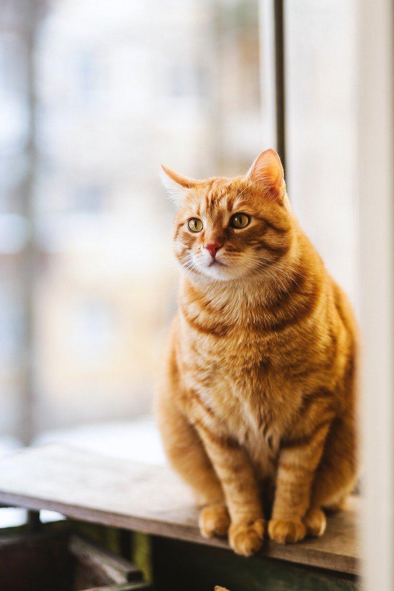 Sitzende mollige rote Katze