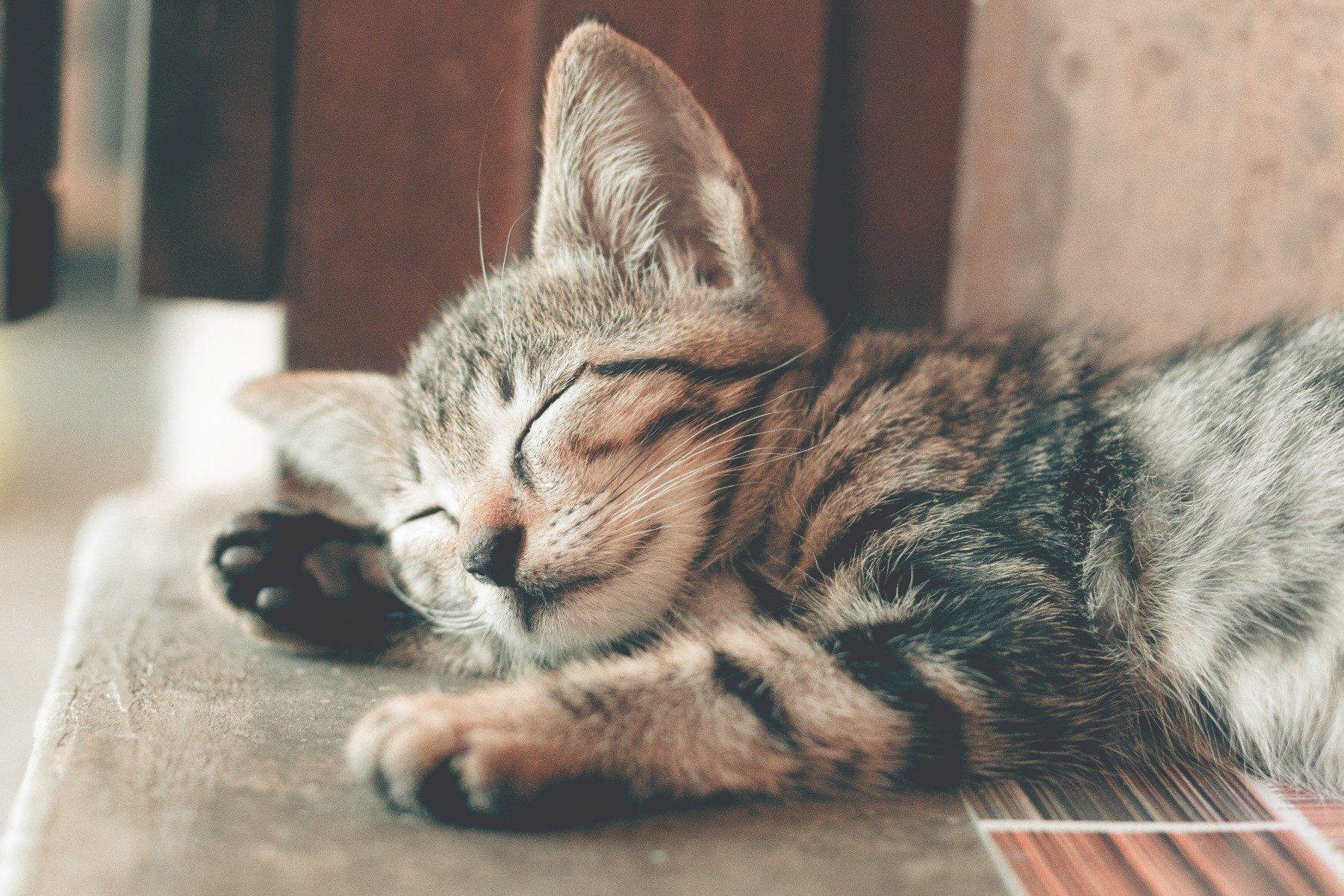 Schlafendes getigertes Katzenbaby