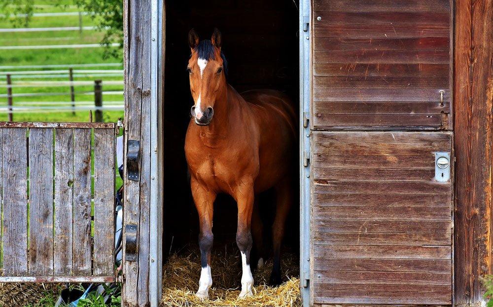 coronavirus pferd stall