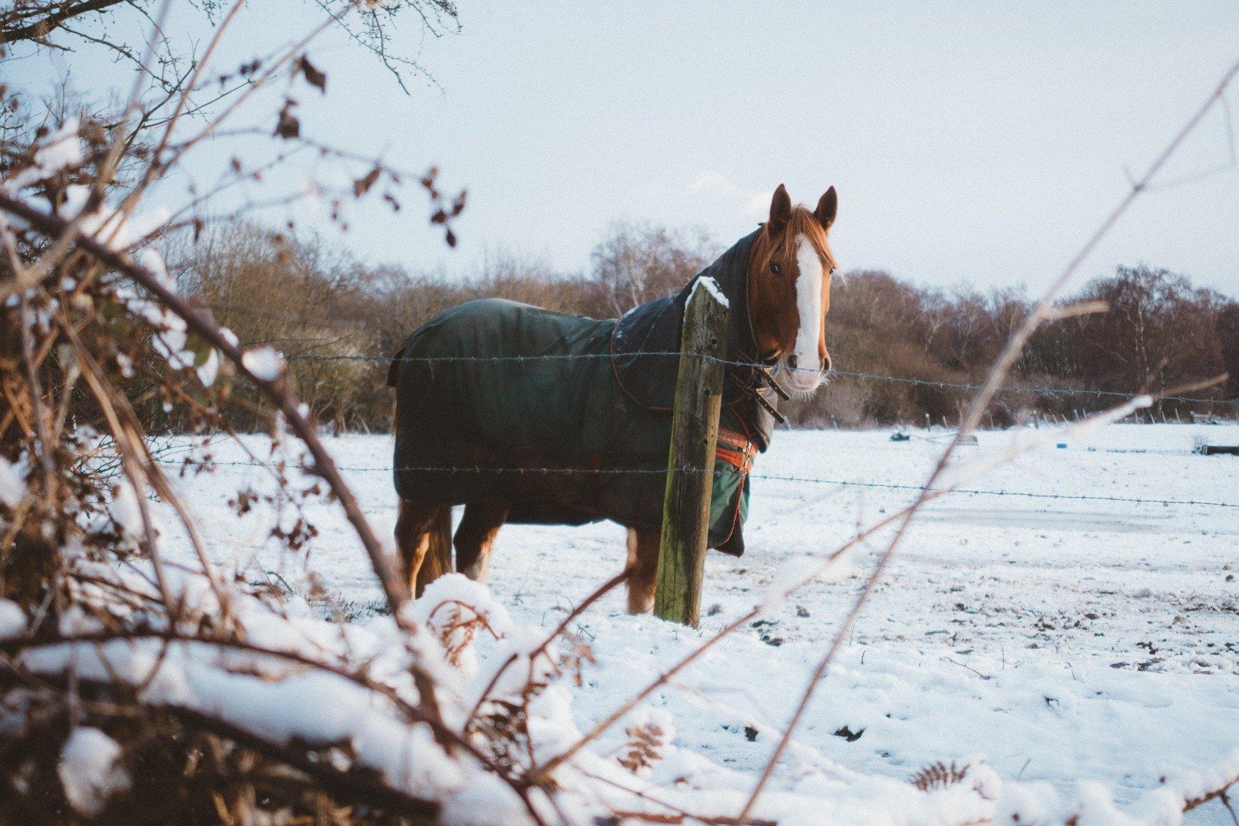 Ein Pferd mit Winterdecke steht im Schnee.