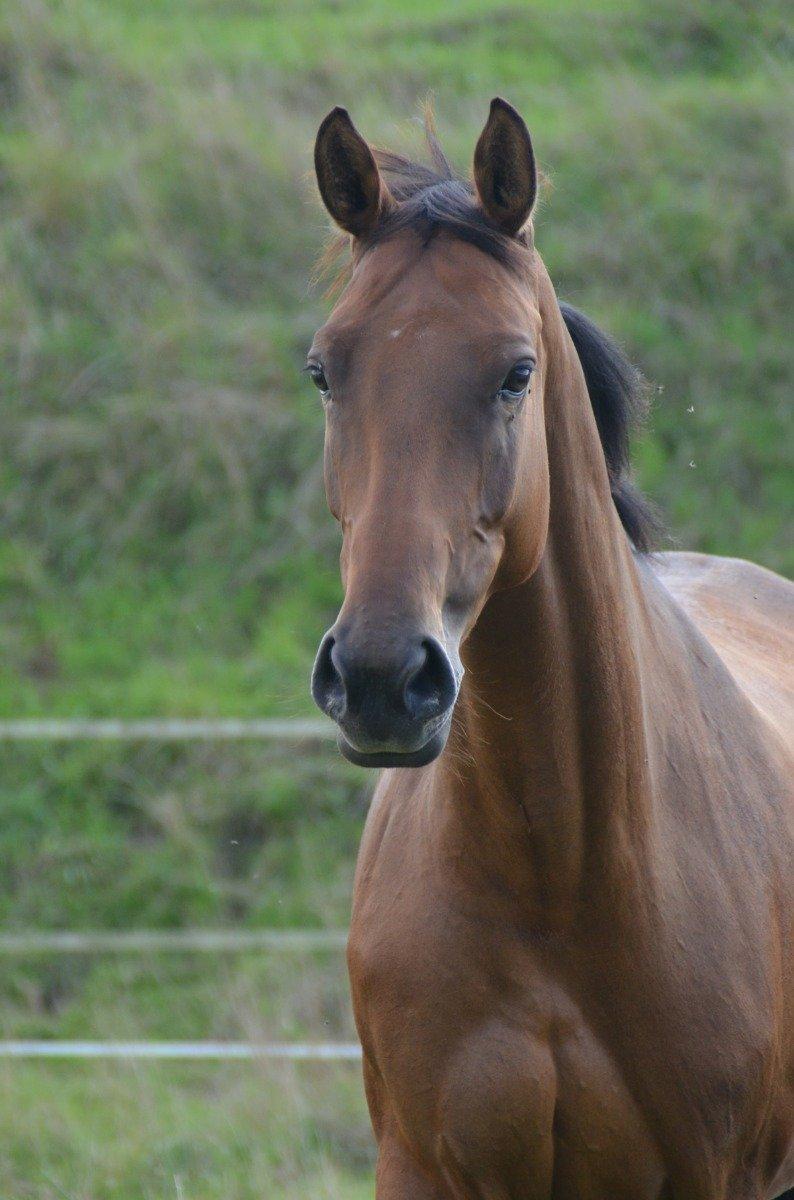 Pferd im Fellwechsel richtig anweiden