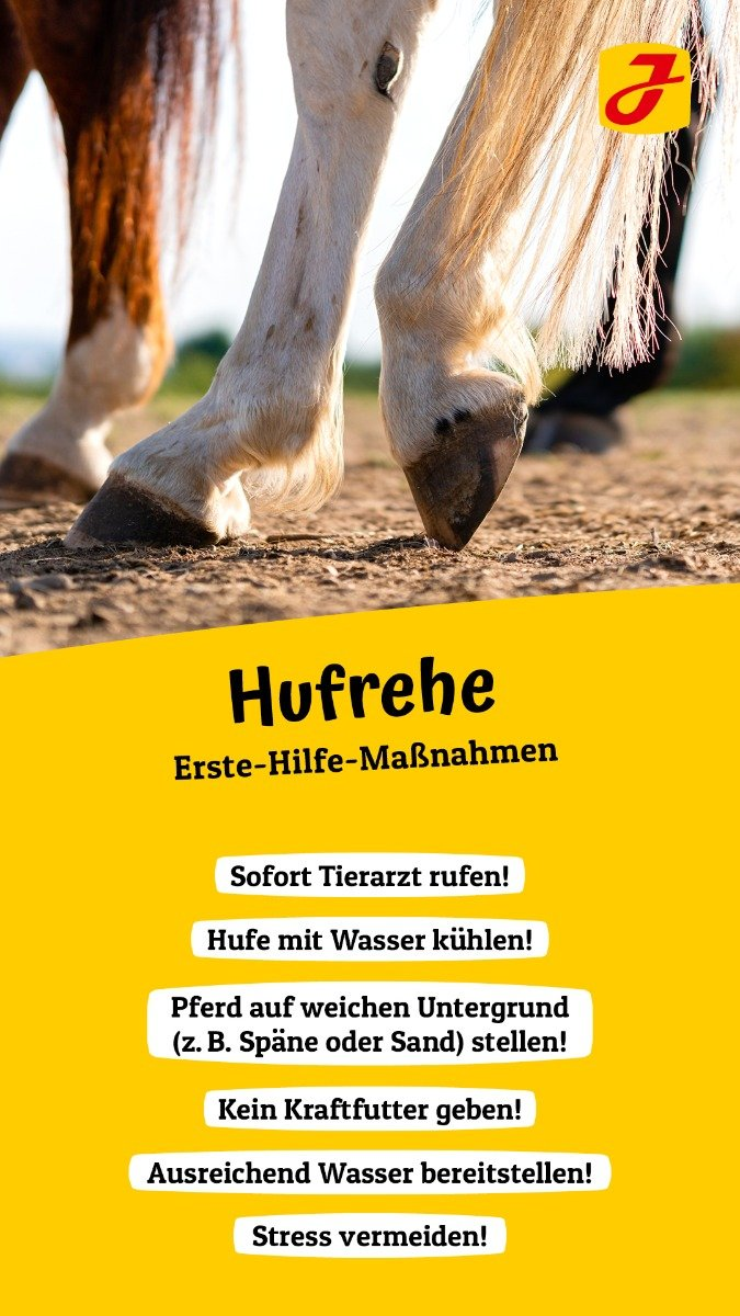 Pferd story mit They're Made