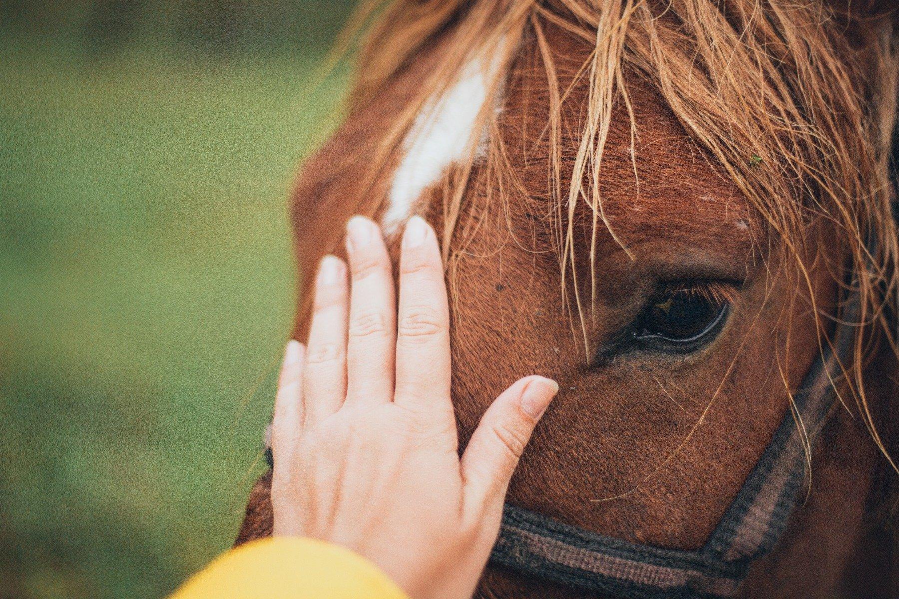Hand streichelt Pferdekopf