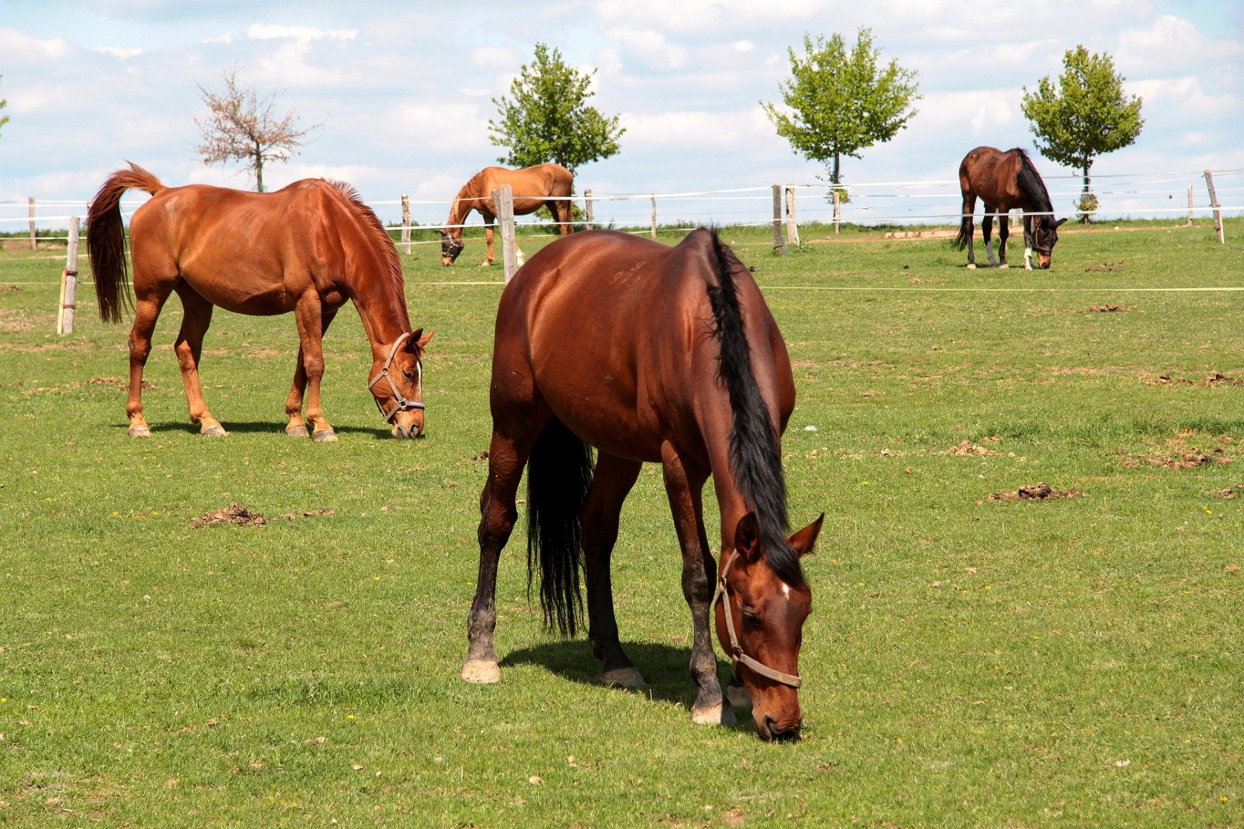 Pferde grasen auf einer Wiese