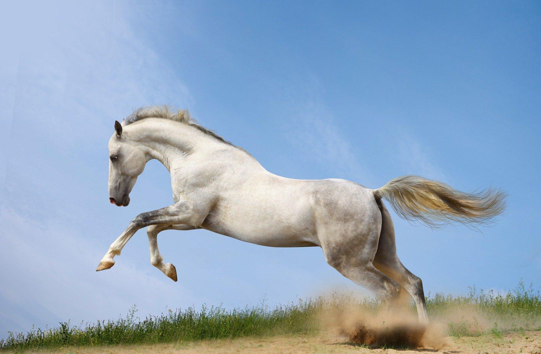 Pferd springt auf der Weide