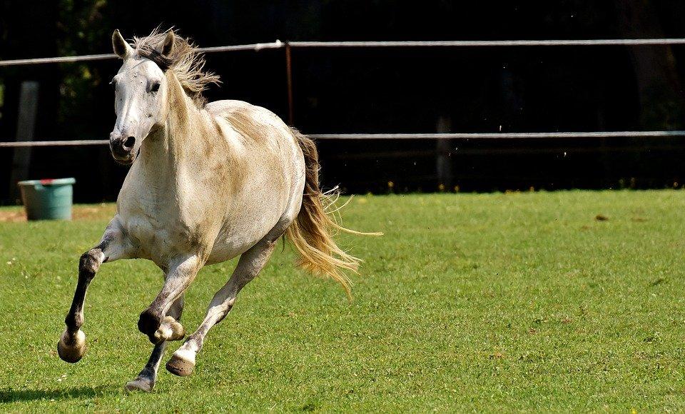 pferd-beim-rennen