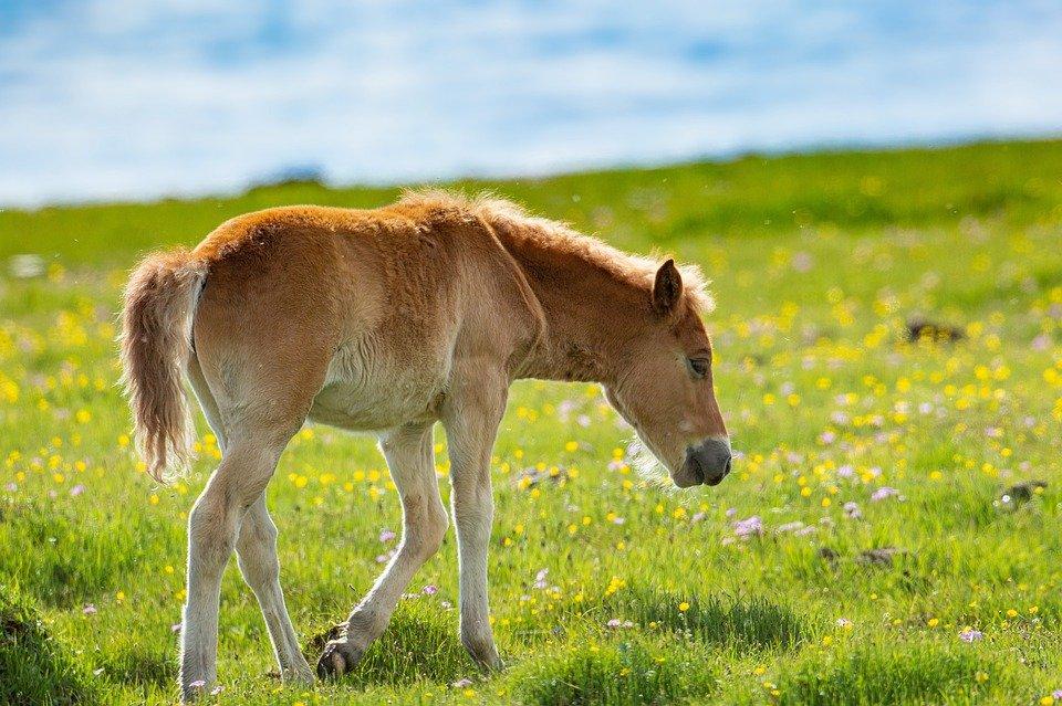 pferd-mit-mähne