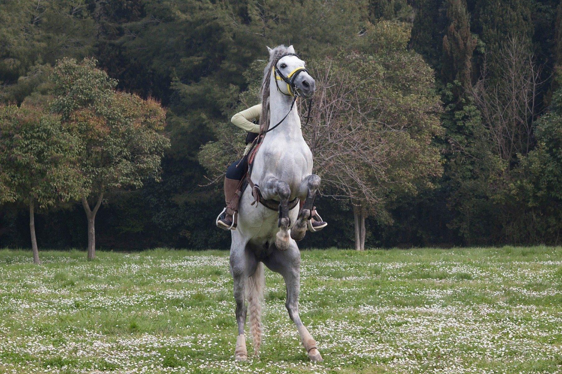 Steigendes Pferd mit Reiter