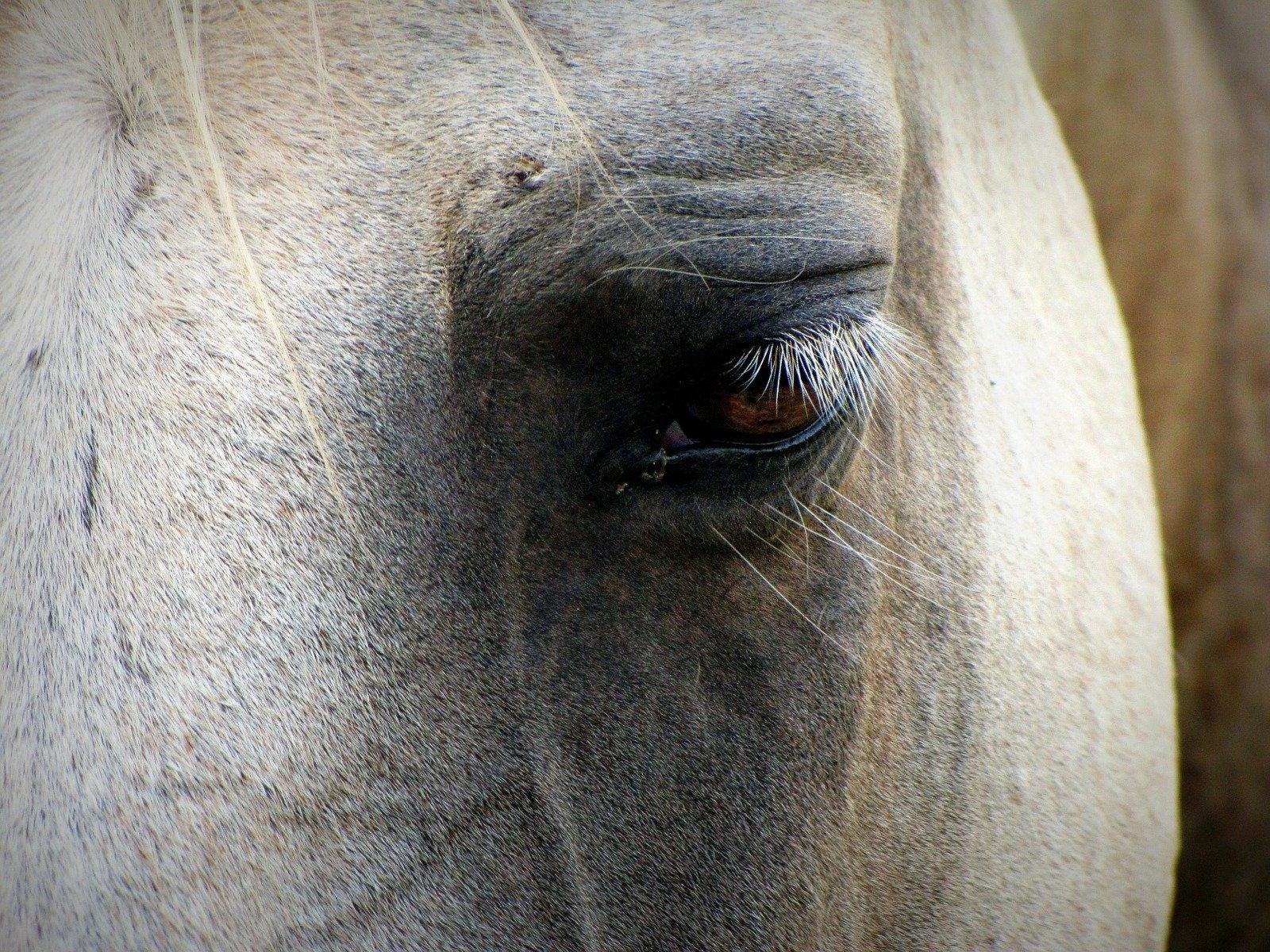 Trauriges Pferd in Nahaufnahme