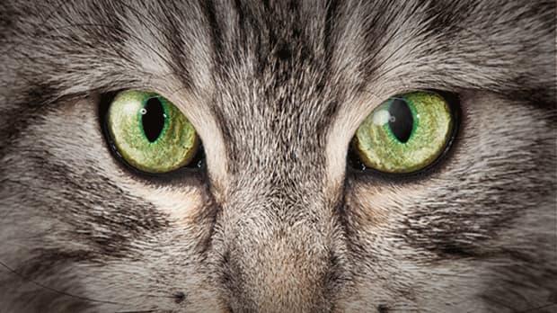 Offizieller JOSERA Shop ➤ Tiernahrung, Tierfutter online kaufen